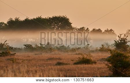 Alvar limestone moor in the early morning light at Isle if Oeland province Kalmar Sweden