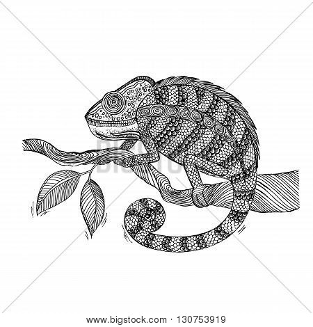 Chameleon on leaf. Black and white hand drawn vector stock illustration