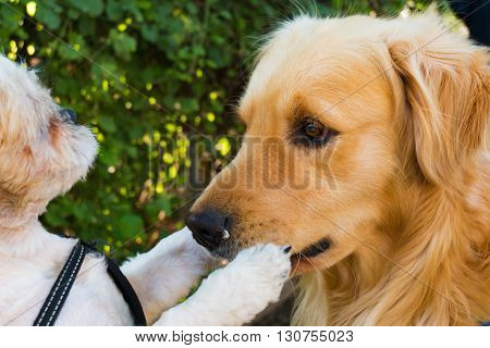 A big dog's mouth is shutted by a small dog