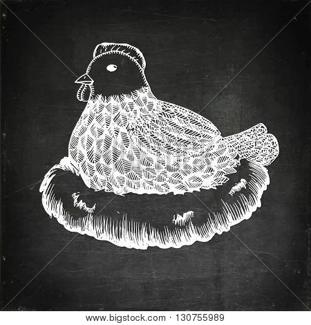 Broody hen in nest. Chalk board vector stock illustration