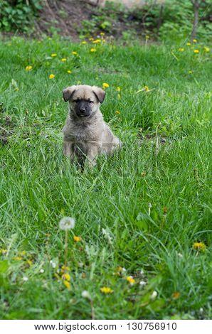 Little cute mongrel puppy in green grass