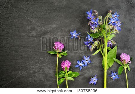 borage and red clover over over dark slate board background