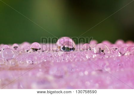 Macro photography showing a water droplet fr background