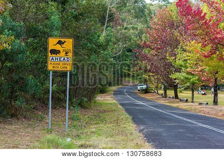 Australian outback road with Wildlife ahead road sign. Country road in rural Australia with Kangaroo Wombats Wildlife ahead on the road warning road sign