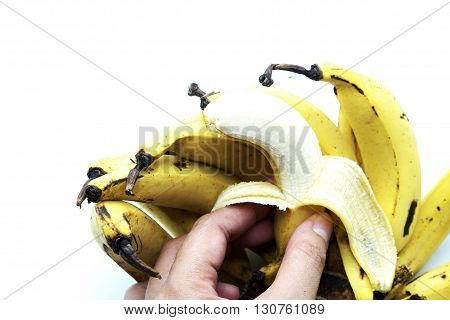 Close up of Lebmuernang banana or slim yellow bunch of banana, Lady finger banana, with hands, isolated on white background. Focus on banana in hands. Space for texts.