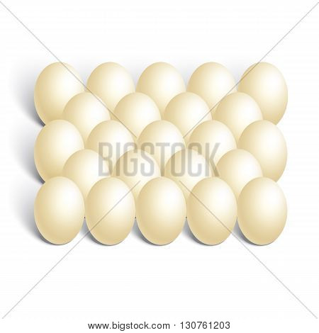 Realistic chicken eggs on white background, vector illustration