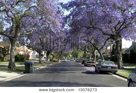A wonderful american street and exlusive properties from our dreams.
