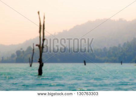 blurred beautiful wood in the sea when sunet