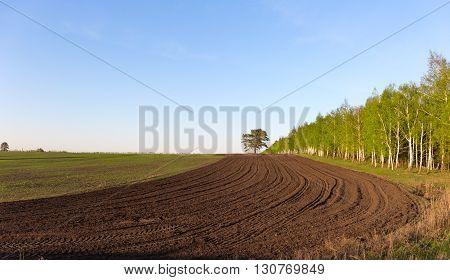 farmer plow a field of trees pine birch.