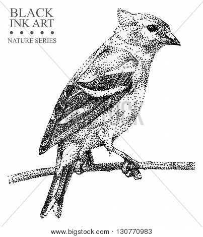 Illustration with bird Siskin drawn by hand with black ink. Graphic drawing pointillism technique. Element for design