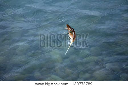 Single brown and white feather floating in shallow water