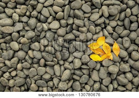 Dark pebbles and rocks with fall leaves.
