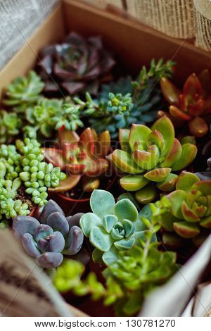 Beautiful Multi-colored Cactus Succulents In A Planter