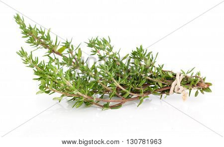 green Thyme herb isolated on white background.