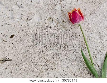 Flower On A Stone Slab