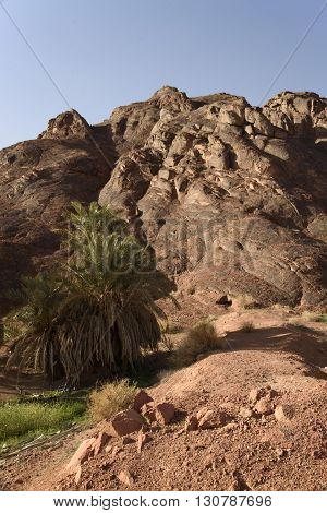Palm trees in the Saudi Arabian mountains