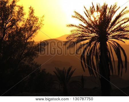 Silhouette of palm tree in the desert sunset
