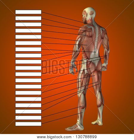 3D illustration of concept or conceptual male or human anatomy, a man with muscles and textbox on red gradient background