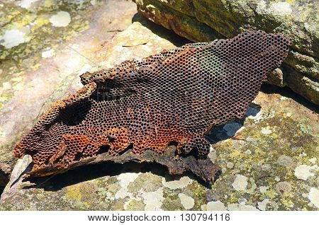 Colourful, natural bush honeycomb from a wild bee hive sitting on a lichen covered sandstone rock