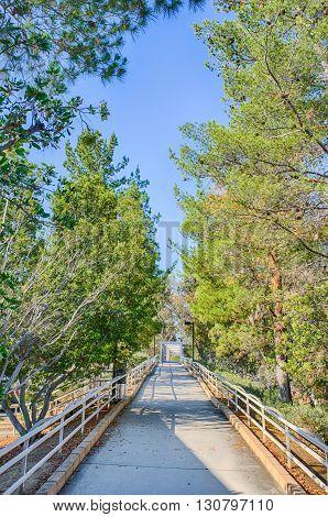 Woods On Bike Trail