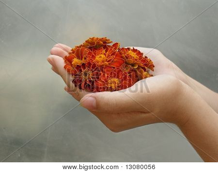 a handful of french marigold