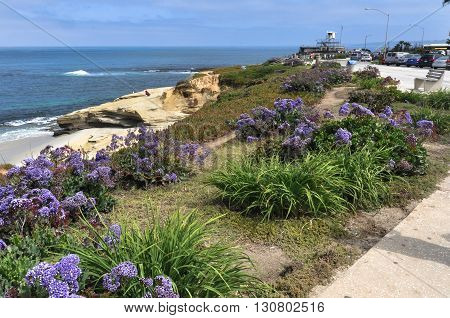 San Diego,California,USA - August 1, 2012 : Flowers on the path along the ocean