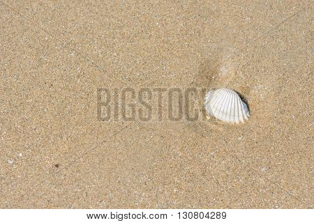 fossil shell on the sand beach background or backdrop