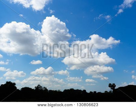 A silhouette of a tree on a blue cloudy sky