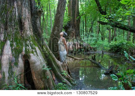 A woman looks at a Big Cypress being in Cache River State Natural Area Illinois USA