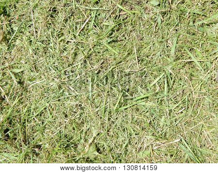 Natural grass background texture for construction green