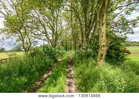 Old Track Between Trees And Fields