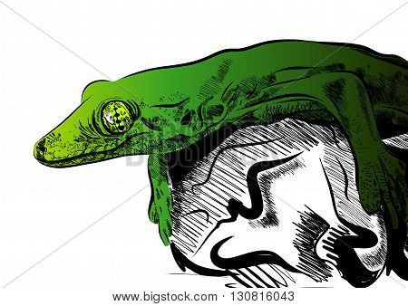 Picture with lizard vector. Graphics on white background. EPS