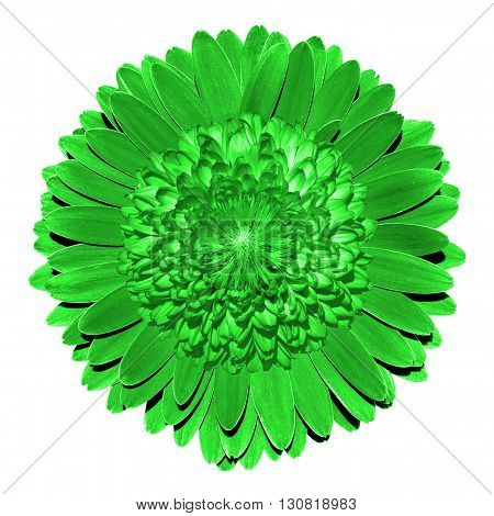 Surrealistic Fantasy Green Flower Macro Isolated On White