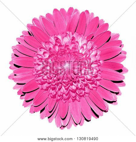 Surrealistic Fantasy Pink Flower Macro Isolated On White