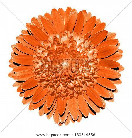 Surrealistic Fantasy Orange Flower Macro Isolated On White