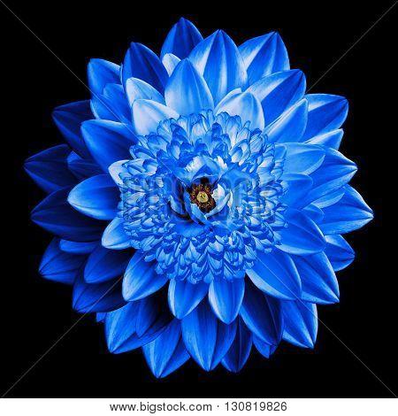 Surrealistic Fantasy Blue Flower Macro Isolated On Black