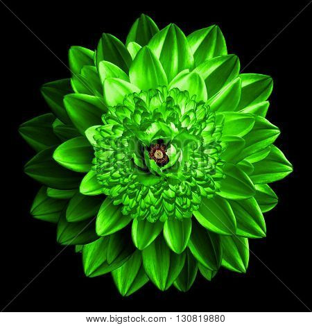 Surrealistic Fantasy Green Flower Macro Isolated On Black