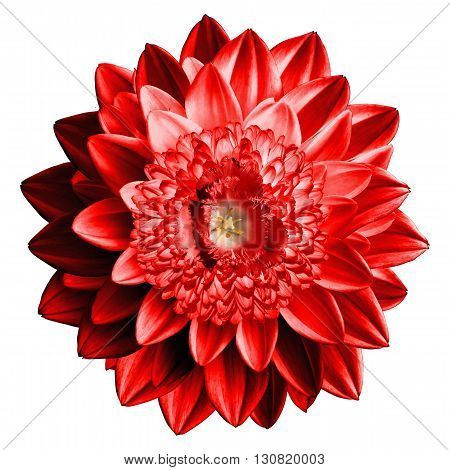 Surrealistic Fantasy Red Flower Macro Isolated On White