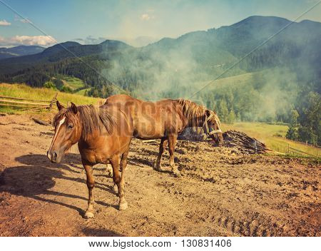 Horses, feeding on grass at high-land pasture at Carpathian Mountains in rays of sunset. Retro color.