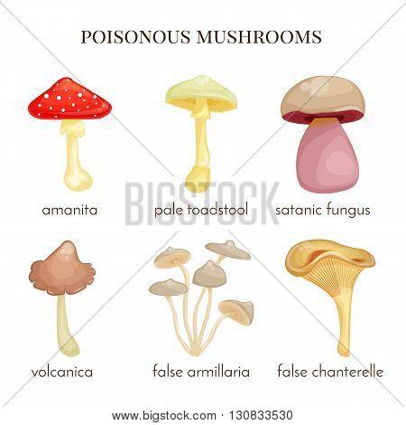 Set of poisonous mushrooms. Red amanita, isolated false chanterelle, false armillaria, satanic fungus, pale toadstool. Vector illustarion. Cartoon style.