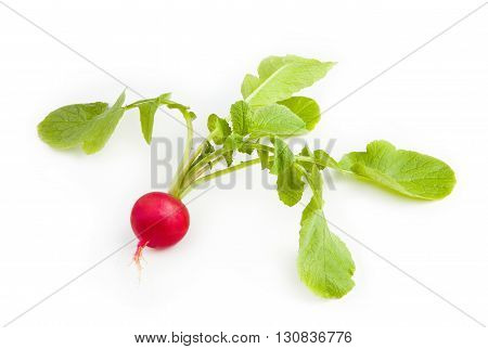 Radish. Fresh red radish isolated on white background.