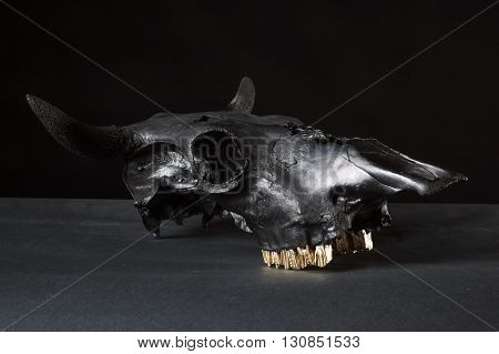 Three quarter view photo of black cow skull on black background