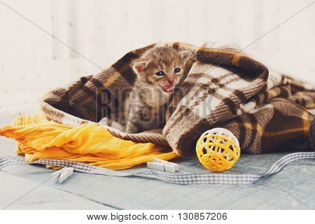 Grey striped newborn kitten in a plaid blanket. Sweet adorable tiny kitten on a serenity blue wood background play with cat toy and ribbon. Small cat. Funny kitten crawling and meowing