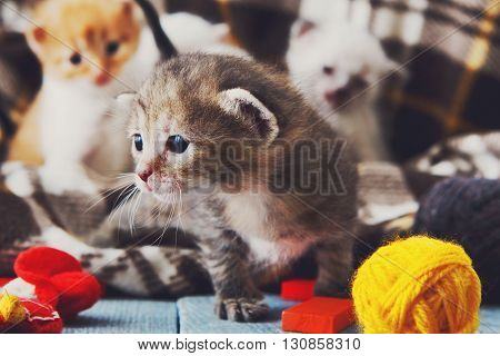 Kittens and mittens. White, Red and grey newborn kittens in a plaid blanket. Sweet adorable tiny kittens on a serenity blue wood play with wool balls and mittens. Funny kittens crawling and meowing