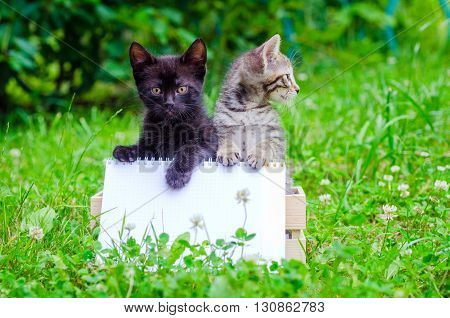 small kitten on wood box, on the grass, outdoor