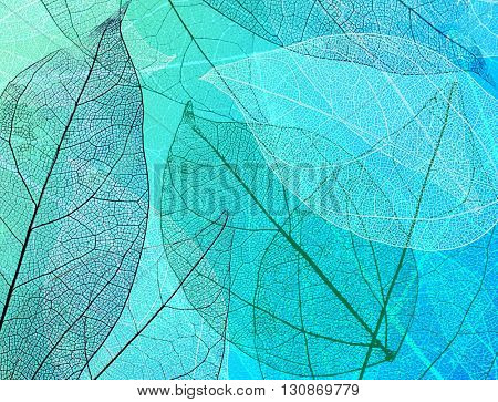 Beautiful abstract background with skeleton leaves