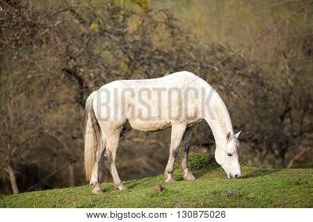 horse waiting outside portrait andalusian fleabitten grey color