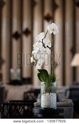 Ornamental plants White orchid flowerpot and blurred background