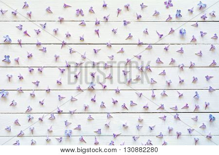 Pattern of lilac flowers on white. Lilac flowers pattern on white wooden background. Flat lay of purple lilac flowers on white backdrop, flat lay