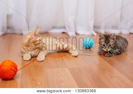 Kuril Bobtail kittens. Game thread. Thoroughbred cat. Cute and funny kitten. Pet.